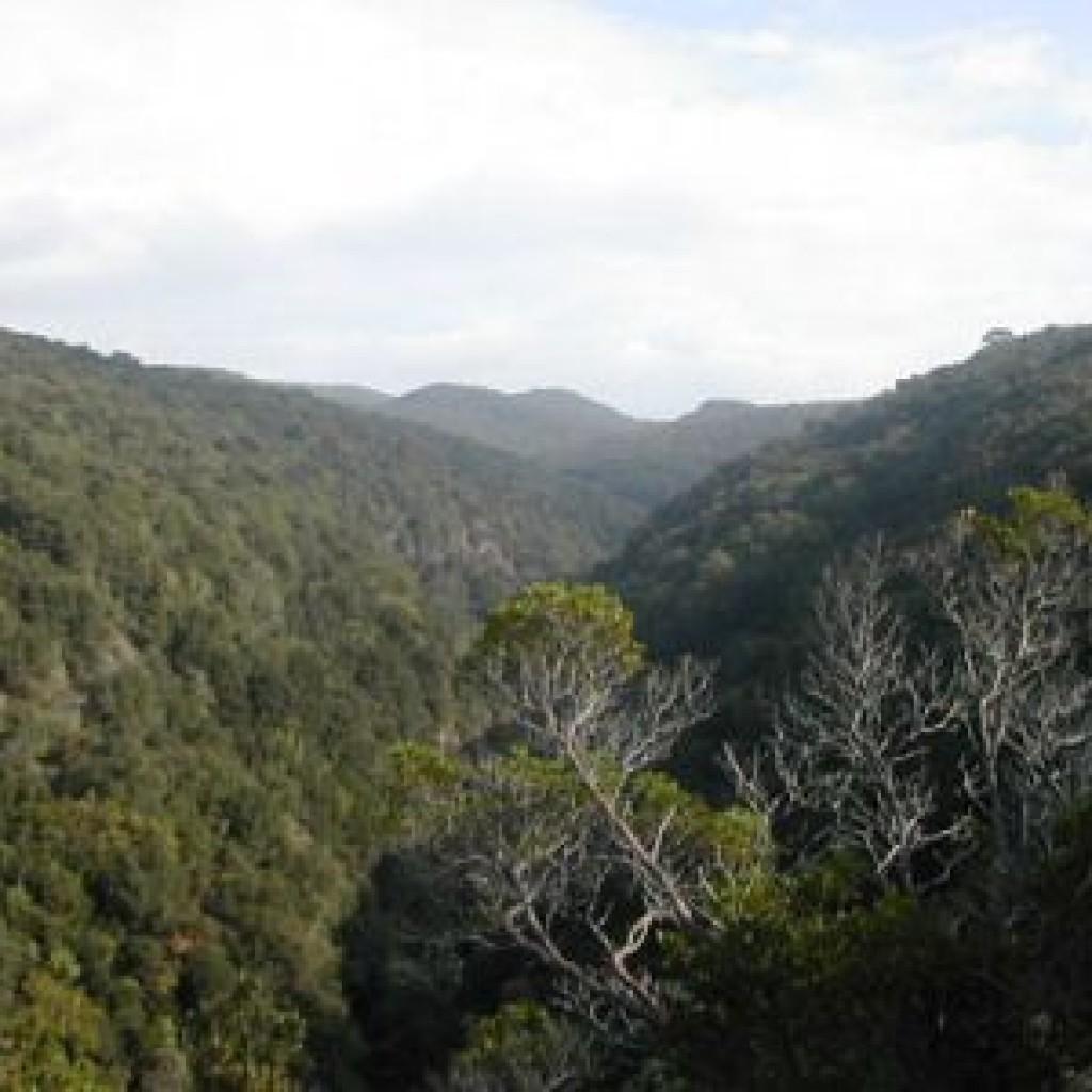 boschi-riserva-di-berignone-a-pomarance