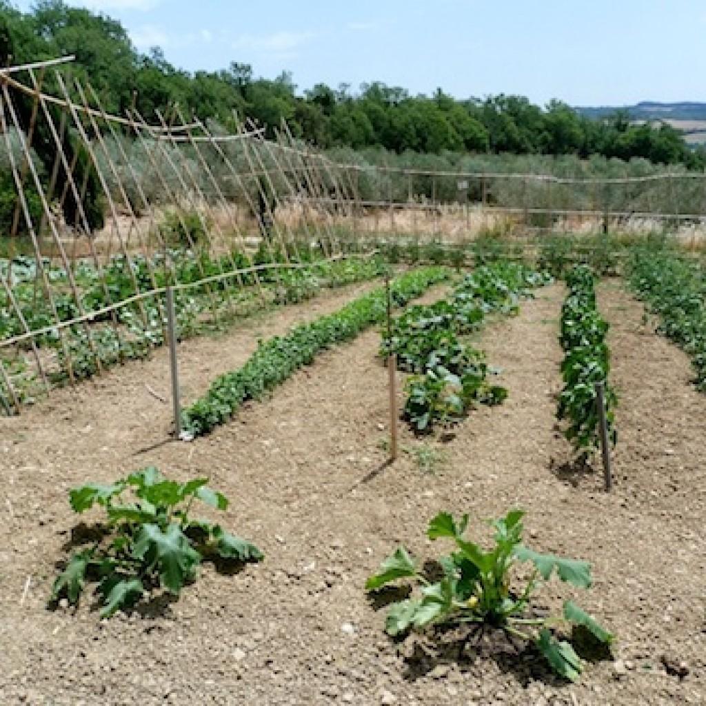 Agriturismo Apparita - il nostro orto