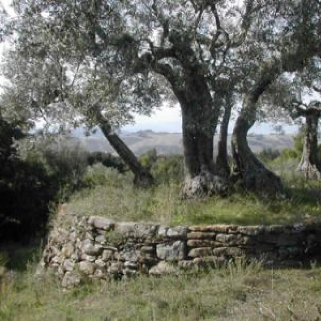 riserva-di-berignone-podere-caprareccia
