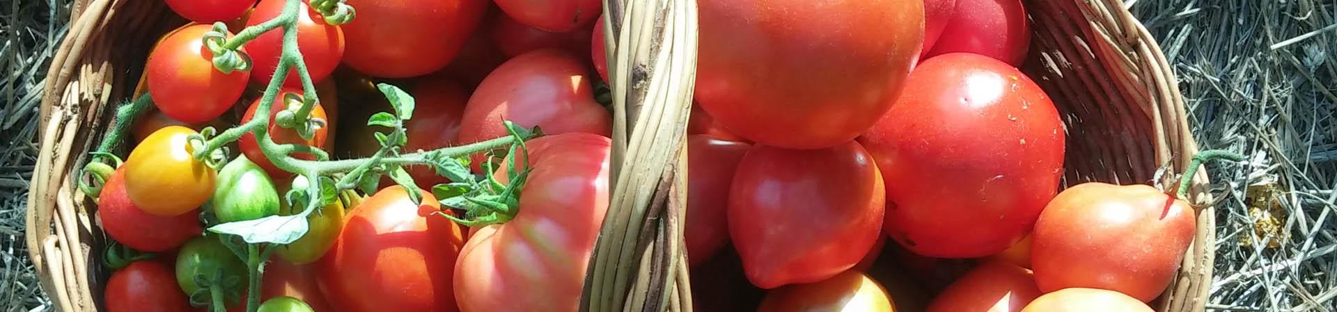 4-pomodori-dell-orto1