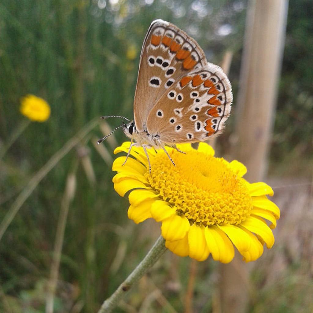 farfalla-filosofia