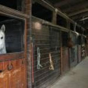 cavallo-escursioni