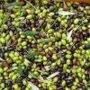 Olivenoel extravergine biologisch